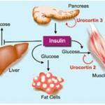 Diabetes Mellitus, Definition, Types, Etiology, Diagnosis, Treatment & Management