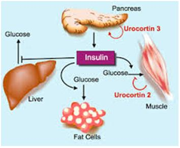 the diagnosis and treatment for type ii diabetes Often when type 2 diabetes is first diagnosed, the problem is insulin resistance   it can cause painful symptoms — tingling, aching, or throbbing — but it can.