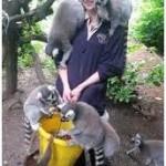 Cattier in Zoology