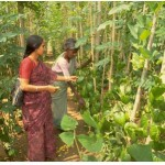 Social Forestry Program