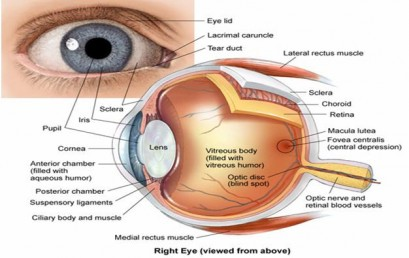 Introduction and Structure of Eye