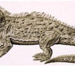 Introduction about Sphenodon punctatus