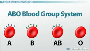 Agglutination reaction (ABO blood grouping)